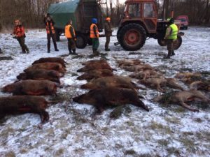 parade of animals after winter driven hunt