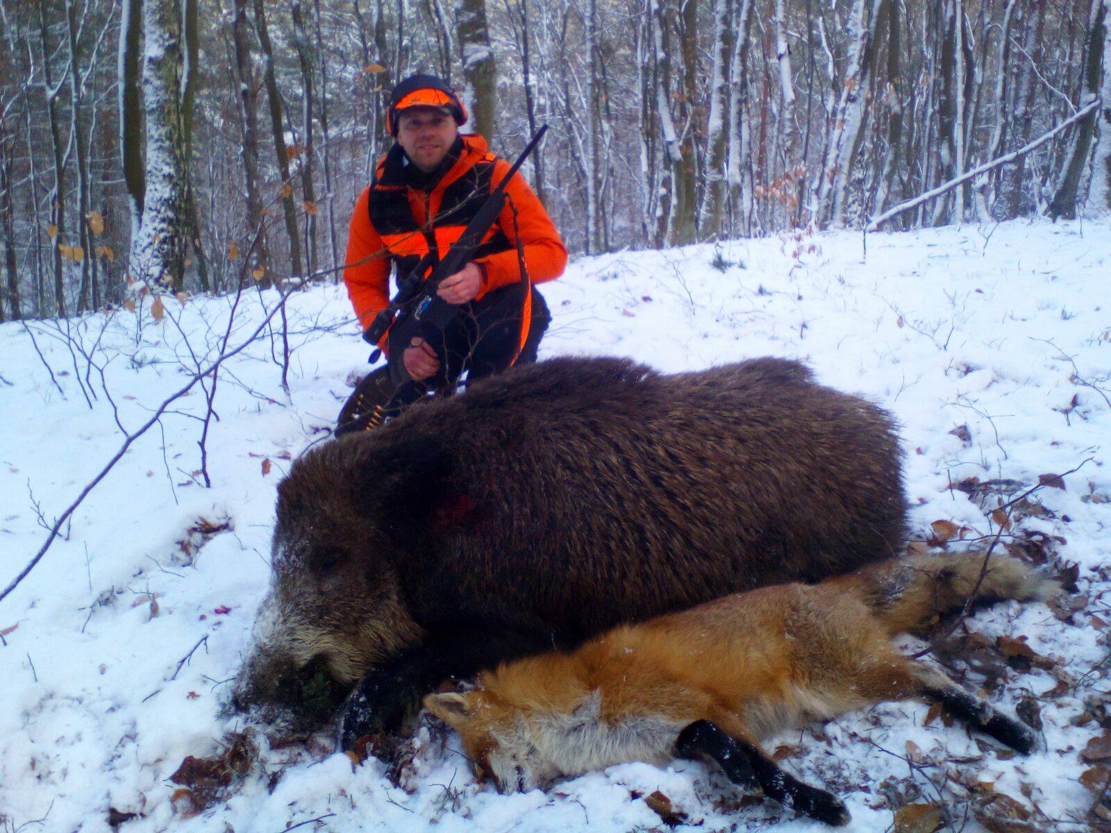 wild boar on show with hunter