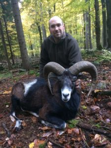 mouflon 75cm shoot by hunter from USA